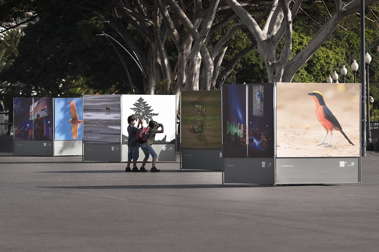 Cubos de la exposición #Naturajazz 2018